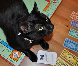 Photo of black cat with Monopoly board and money