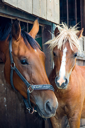 Photo of two horses in stable