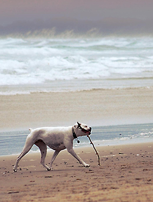 Photo of dog with stick on a beach